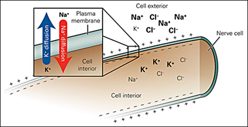 آزمایش سنجش میزان الکترولیتها (سدیم، پتاسیم، کلر، بیکربنات و …)